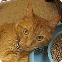 Adopt A Pet :: Troy - McHenry, IL