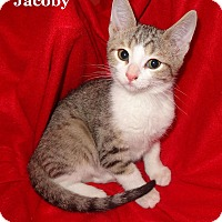 Adopt A Pet :: Jacoby - Bentonville, AR