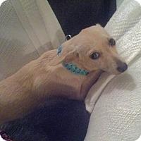 Adopt A Pet :: Laverne - Natchitoches, LA