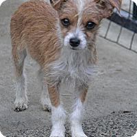Adopt A Pet :: Luke - Yuba City, CA