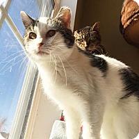 Adopt A Pet :: Susie Q: Adoption Fee Sponsored - Indianapolis, IN
