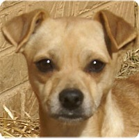 Adopt A Pet :: CiCi - Hagerstown, MD
