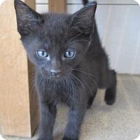 Adopt A Pet :: Moshi - North Richland Hills, TX