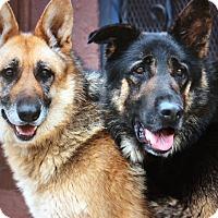 Adopt A Pet :: ANINA VON AMARA - Los Angeles, CA