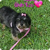 Adopt A Pet :: Tasha - Wellington, FL