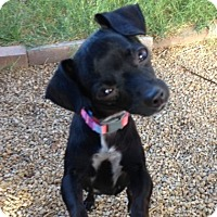 Adopt A Pet :: Pixie - Las Vegas, NV