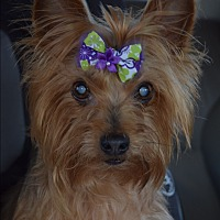 Adopt A Pet :: Ellie - Statewide and National, TX