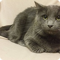 Adopt A Pet :: Smokey - Cannelton, IN