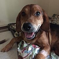 Adopt A Pet :: Nino - Avon, OH