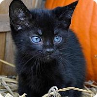 Adopt A Pet :: Salem - Yardley, PA