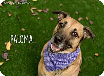 Shepherd (Unknown Type) Mix Dog for adoption in Kansas City, Missouri - Paloma