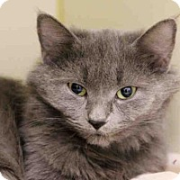 Adopt A Pet :: WHISKERS - Pittsburgh, PA