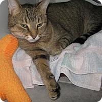 Adopt A Pet :: Chaz - Toronto, ON