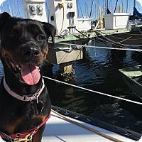 Adopt A Pet :: Lizzy - New Smyrna Beach, FL