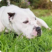 Adopt A Pet :: Cary - San Diego, CA