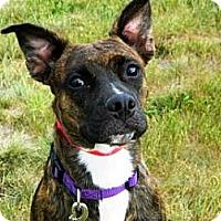 Adopt A Pet :: Belladona - Cheyenne, WY
