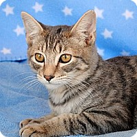 Adopt A Pet :: Hunter - Palmdale, CA