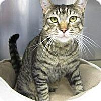 Adopt A Pet :: Bob - Lafayette, CA