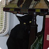 Adopt A Pet :: binx - Laguna Woods, CA