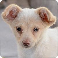 Adopt A Pet :: Jasmine (green eyes) - Toluca Lake, CA