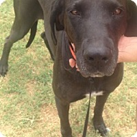 Adopt A Pet :: Baby - McAllen, TX
