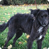 Adopt A Pet :: Jackson - Broomfield, CO