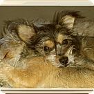 Adopt A Pet :: Collin
