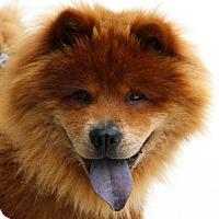 Adopt A Pet :: Rusty - Tucker, GA