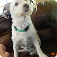 Jack Russell Terrier Dog for adoption in Umatilla, Florida - Abby