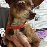 Adopt A Pet :: Penny - Westminster, CA