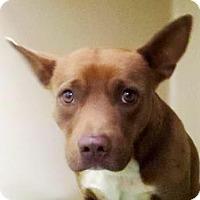 Adopt A Pet :: Zeus - Lincolnton, NC