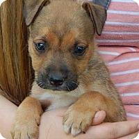 Adopt A Pet :: Luke (5 lb) Video! - SUSSEX, NJ