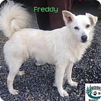 Adopt A Pet :: Freddy - Sweet personality! - Huntsville, ON