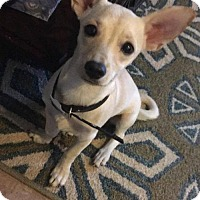 Adopt A Pet :: Mia - Pikeville, KY