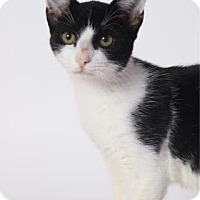 Adopt A Pet :: Ms. Kitty - Baton Rouge, LA