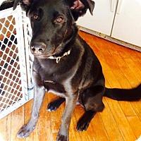 Adopt A Pet :: Expresso - Los Banos, CA