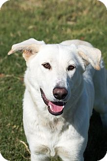 German Shepherd Dog Mix Dog for adoption in Walnut Creek, California - Ginny