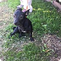 Adopt A Pet :: Piper (pending) - Coldwater, MI