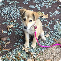 Adopt A Pet :: Sally - Plainfield, CT
