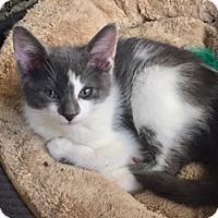 Adopt A Pet :: Aidan - McKinney, TX