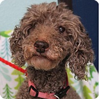 Adopt A Pet :: WHITNEY:Low Fees - Red Bluff, CA