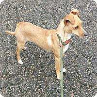 Adopt A Pet :: Frieda - Livingston, TX