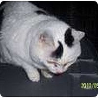 Adopt A Pet :: Catlin - Mtn Grove, MO