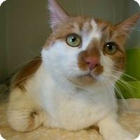 Adopt A Pet :: Tiger - N. Berwick, ME