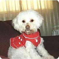 Adopt A Pet :: Alexis - Mooy, AL
