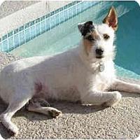 Adopt A Pet :: SPARKY - Phoenix, AZ