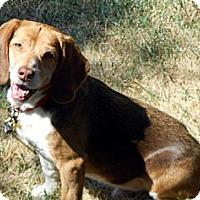 Adopt A Pet :: Rusty - Novi, MI
