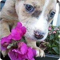 Adopt A Pet :: Satin - Bakersfield, CA