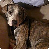 Adopt A Pet :: Mazey - Floresville, TX