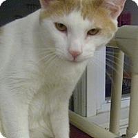 Adopt A Pet :: Berkley - Hamburg, NY